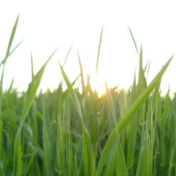 beautiful garden grass